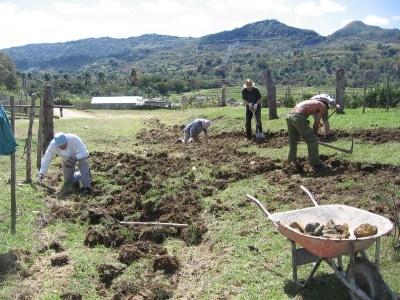 Feldarbeiten wie Aussaat, Unkraut jäten und Verziehen von Stecklingen