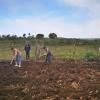 9. März: Arbeitseinsatz auf einem Gemüsefeld in Filicidad hinter dem Gästehaus, Foto: Cuba Sí